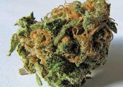 Blomma från cannabisplantan